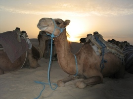 Camel Riding - The Ultimate Low Carbon Vehicle